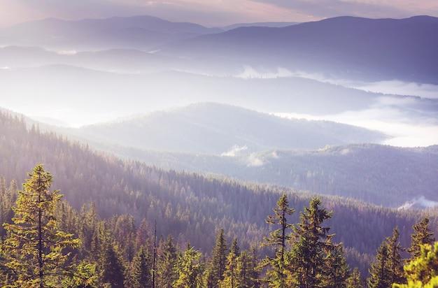 Piękne Naturalne Krajobrazy W Karpatach Premium Zdjęcia