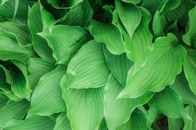 Piękne naturalne tło lub tapeta z roślin liściastych - idealne do artykułów / postów związanych z przyrodą