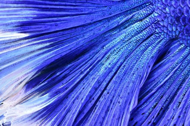 Piękne niebieskie ryby skaluje obraz tła.