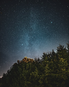 Piękne, niskie ujęcie lasu i nieba pełnego początków