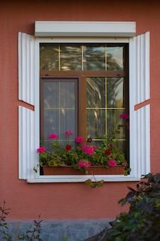 Piękne okno z kwiatem