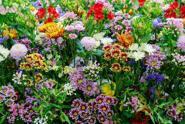 Piękne ozdobne kolorowe rośliny.
