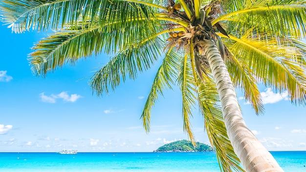 Piękne palmy kokosowe