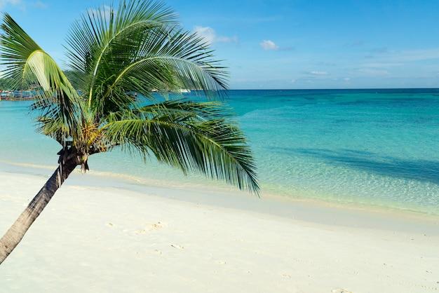 Piękne palmy na plaży pattaya, pochmurno na koh lipe, zachodnie morze andamańskie