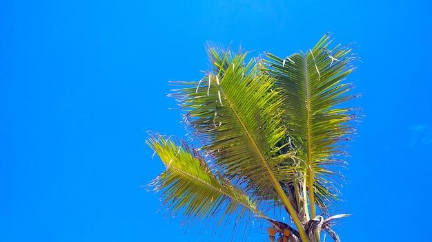 Piękne palmy na tle błękitnego nieba