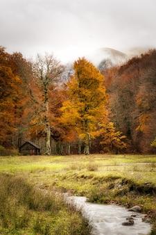 Piękne pionowe ujęcie lasu jesienią