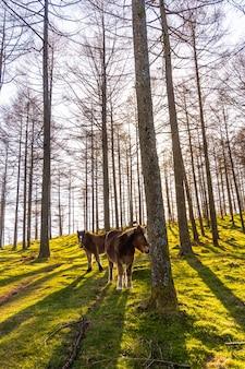 Piękne pionowe ujęcie wolnego dzikiego konia w lesie oianleku o wschodzie słońca