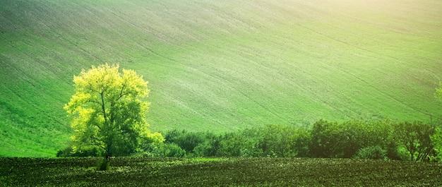 Piękne pola morawskie