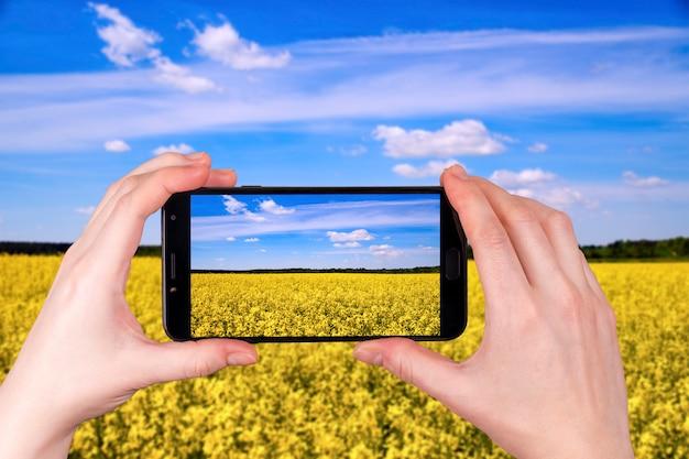 Piękne pola rzepaku w słoneczny dzień. zdjęcie telefonu