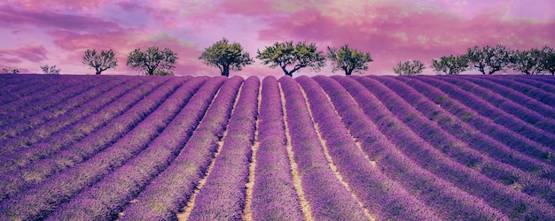 Piękne pole lawendy z pochmurnego nieba, francja, europa