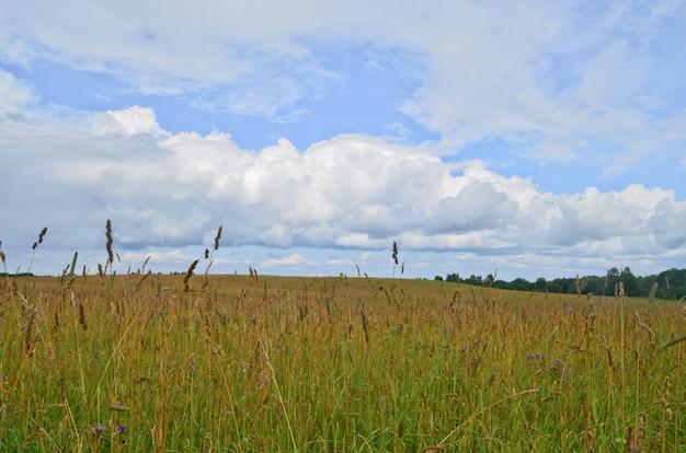 Piękne pole w pochmurny dzień lata.
