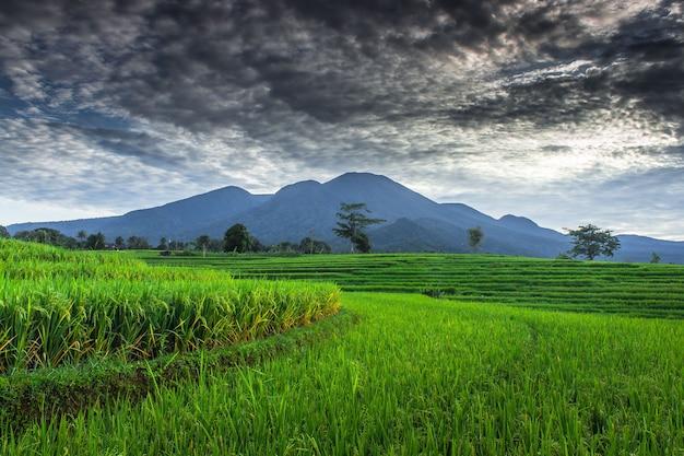 Piękne poranne panoramy na zielonych polach ryżowych i błękitnych górach w indonezji