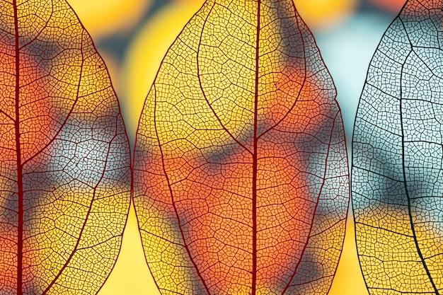 Piękne przezroczyste jesienne liście