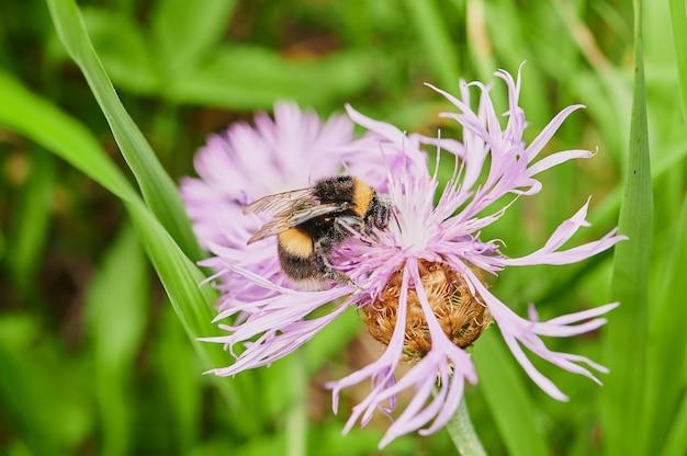 Piękne przydrożne kwiaty, różnorodność przyrody