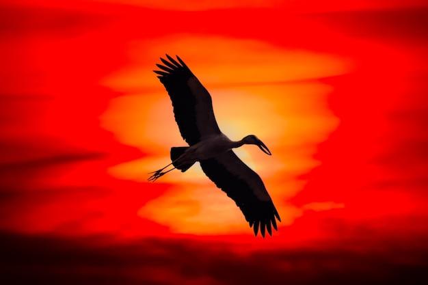 Piękne ptaki latające o zachodzie słońca