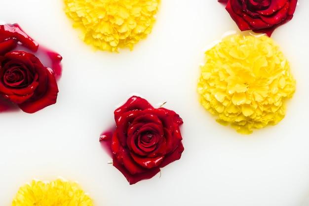 Piękne Róże I Piwonie Kwitną W Kąpieli Mlecznej. Pojęcie Zabiegów Spa, Relaksacji, Zabiegów Spa, Terapii Premium Zdjęcia