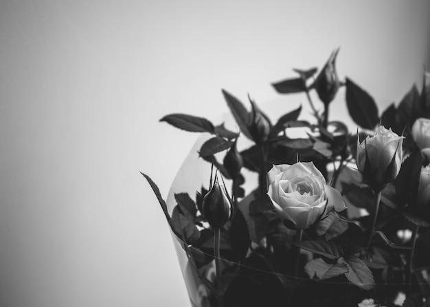 Piękne róże na parapecie