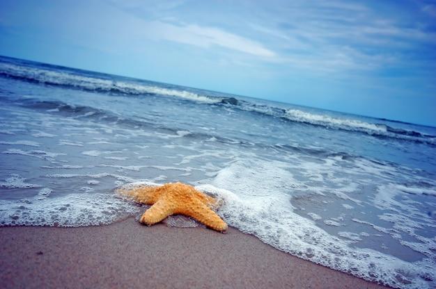 Piękne rozgwiazdy na brzegu morza