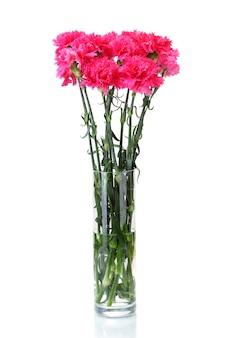 Piękne różowe goździki w szklanym wazonie na białym tle