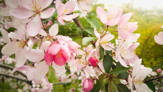 Piękne różowe kwiaty na gałęzi w słoneczny dzień