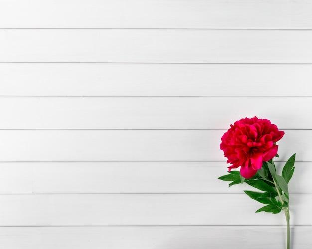 Piękne różowe kwiaty piwonii marsala na białym rustykalnym drewnianym stole z widokiem z góry miejsca na kopię i stylem płaskiego świecenia.