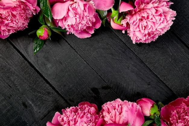Piękne różowe kwiaty piwonii na czarnym tle