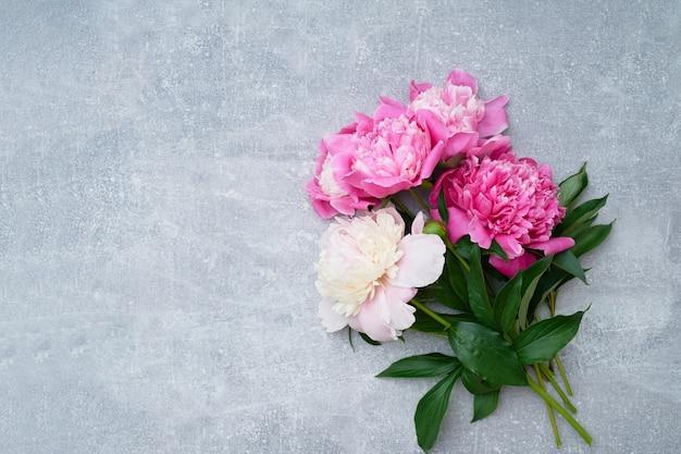 Piękne różowe piwonie kwiaty na szaro.