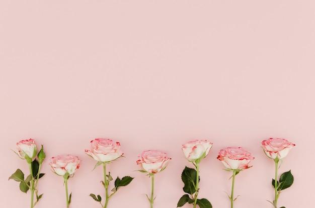 Piękne różowe róże z miejsca kopiowania