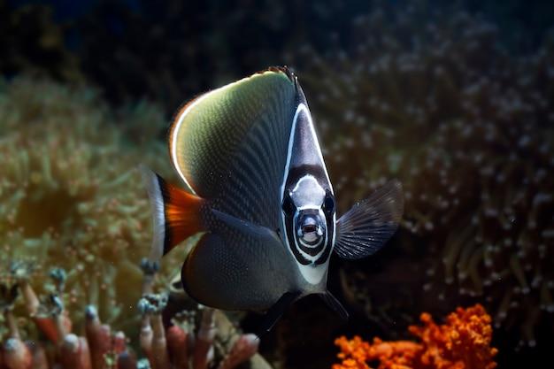 Piękne ryby na dnie morskim i rafy koralowe