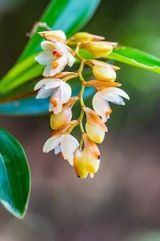 Piękne rzadkie dzikie orchidee w tropikalnym lesie