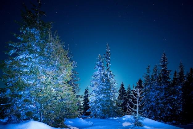 Piękne smukłe jodły rosną wśród pokrytych śniegiem zasp na zboczu wzgórza na tle błękitnego nieba i jasnego księżyca w mroźną zimową noc. koncepcja wypoczynku poza miastem zimą