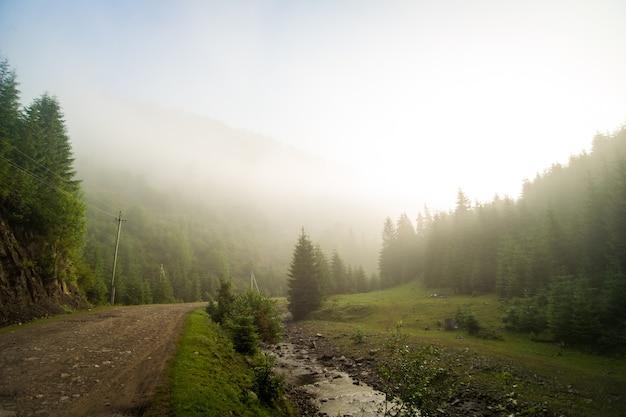 Piękne sosny w górach