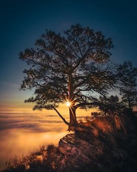 Piękne stare drzewo rosnące na skraju skały z niesamowitymi chmurami z boku i światłem słonecznym