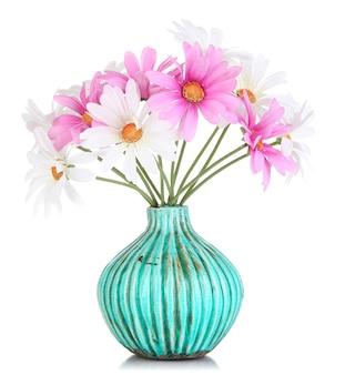 Piękne stokrotki w kolorowym wazonie na białym tle