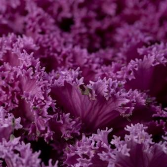 Piękne streszczenie fioletowa roślina