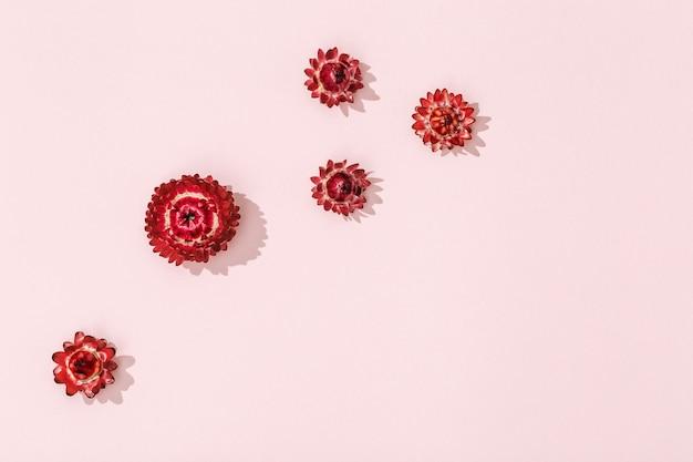 Piękne suszone czerwone kwiaty, drobne kwiaty na delikatnym różu