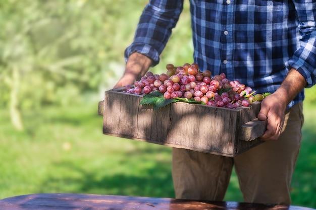 Piękne, świeże, surowe, organiczne winogrona