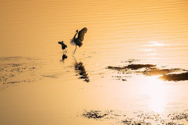 Piękne sylwetki ptaków o zachodzie słońca