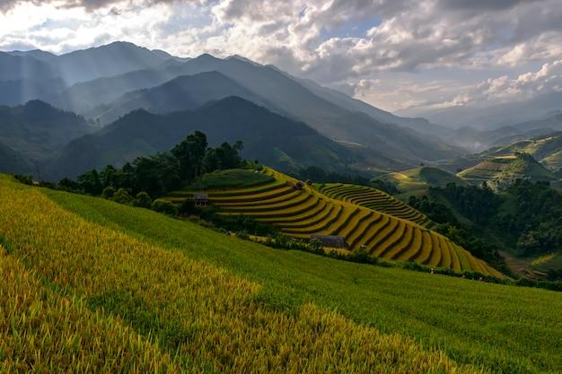 Piękne tarasy ryżowe, w mu cang chai, yenbai, wietnam.