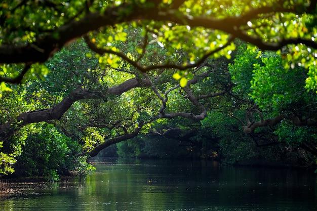 Piękne tereny podmokłe sicao mangrove green tunnel