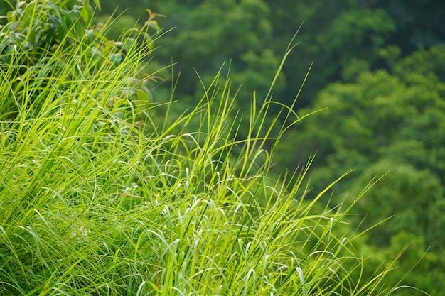 Piękne tło obrazów zielonej trawy