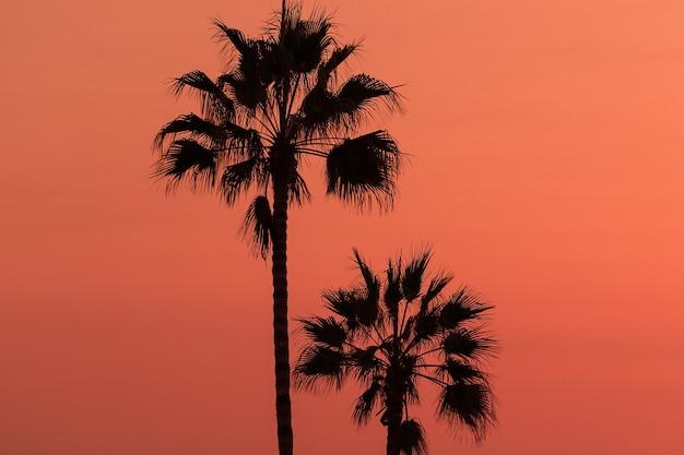 Piękne tło z palmami sylwetka na niebie zachodu słońca