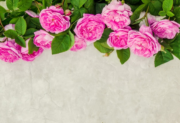 Piękne tło z róż. selektywna ostrość.