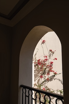 Piękne tropikalne drzewo roślina z czerwonymi kwiatami w beżowym oknie budynku z cieniami słońca.