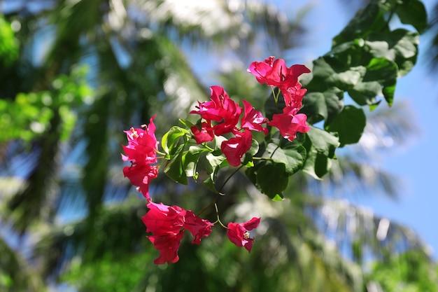 Piękne tropikalne kwiaty na zewnątrz w słoneczny dzień