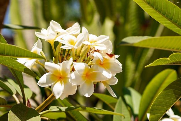 Piękne tropikalne kwiaty