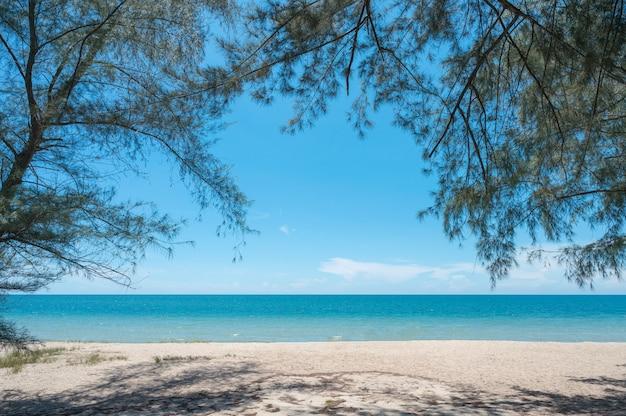 Piękne tropikalne morze z zacienioną gałęzią drzewa na plaży