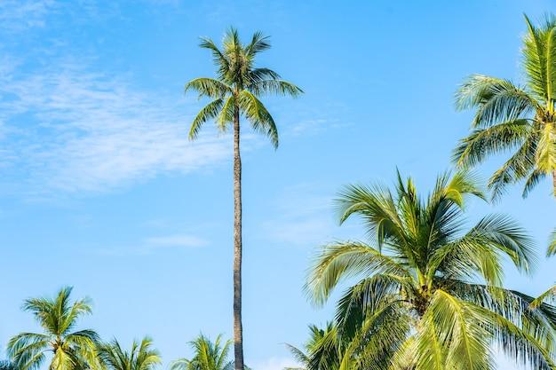 Piękne tropikalne palmy kokosowe z białą chmurą wokół błękitnego nieba na tle przyrody
