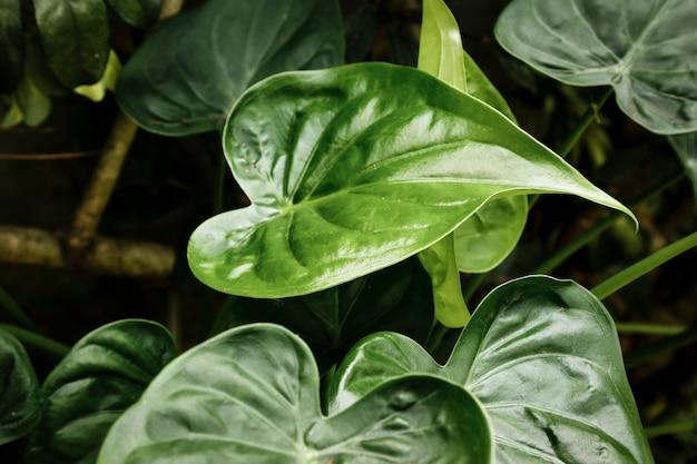 Piękne tropikalne rośliny z zamazanym tłem