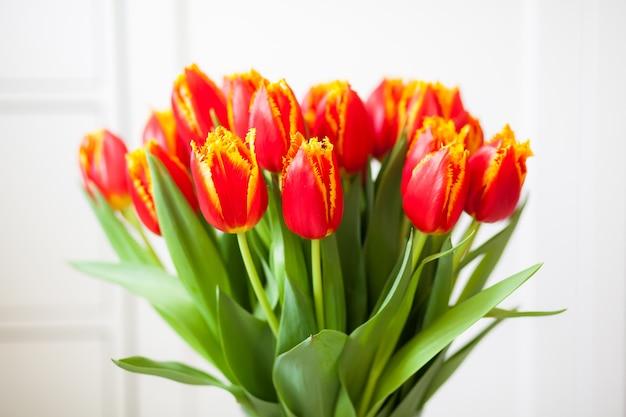 Piękne tulipany joint division